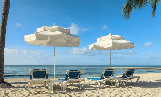 Beach recliners and umbrellas under palm trees at Southernmost Beach Resort.