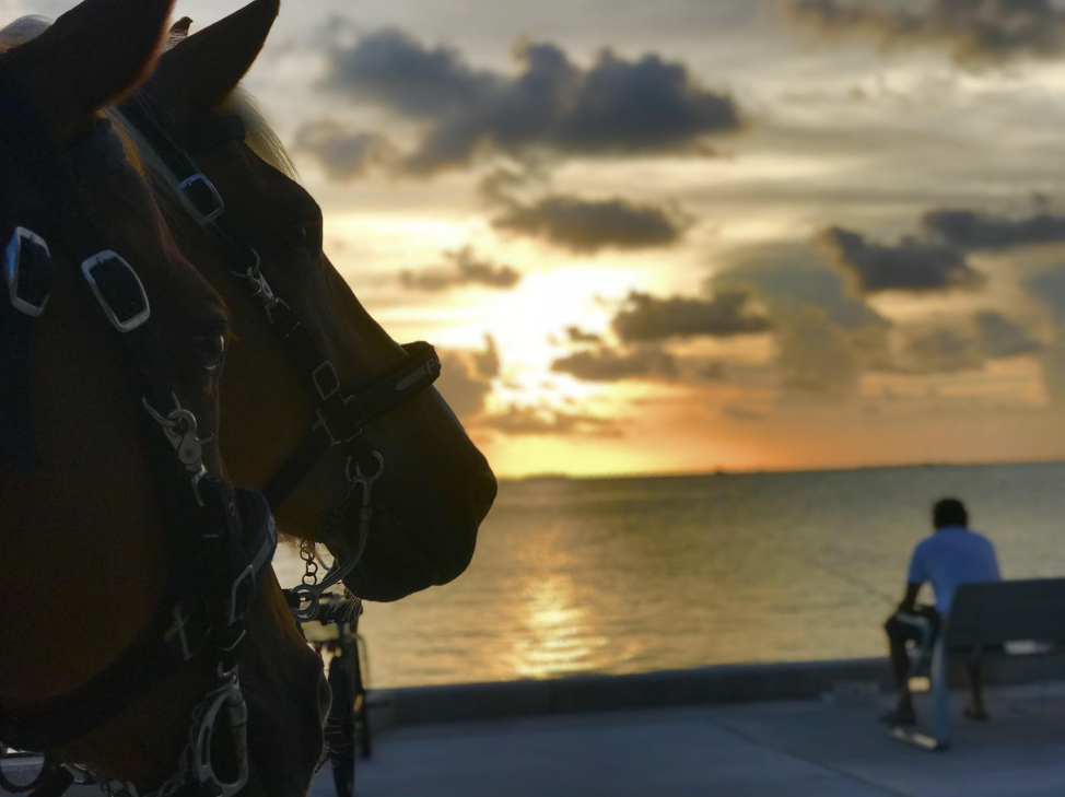 Two carriage horses looking at the sunset at Truman Waterfront Park.
