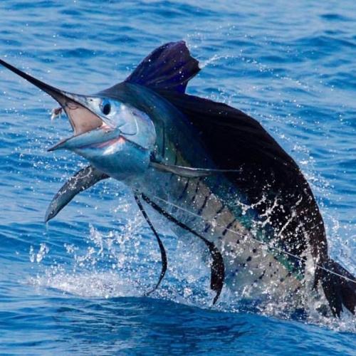 Big Game Fishing in Key west 1