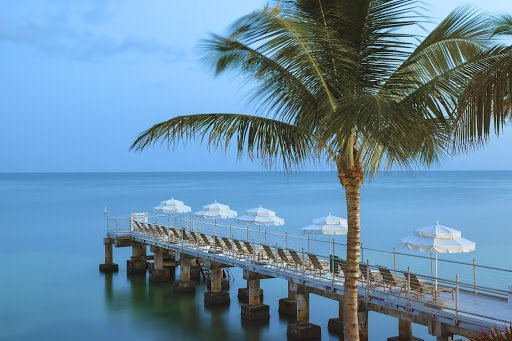 A long dock with beach chairs, umbrellas and a palm tree.